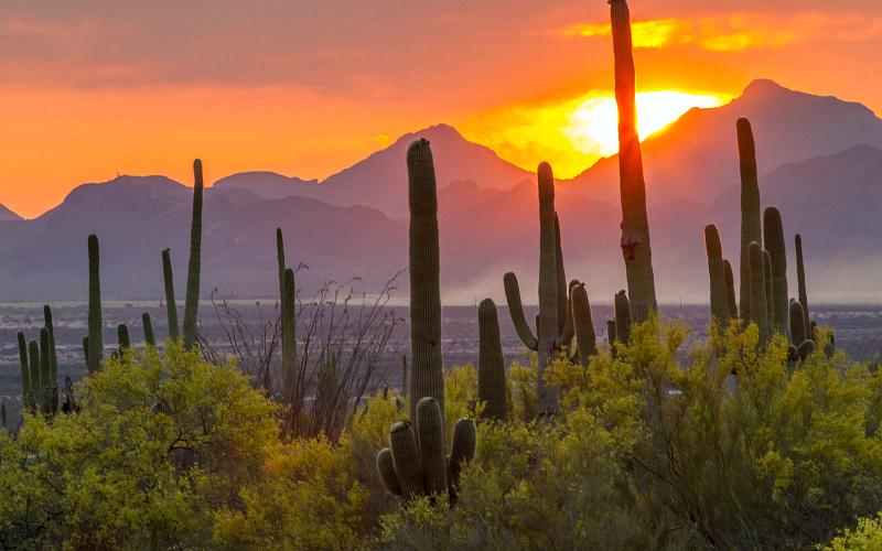 Saguaro-National-Park-NP0416.jpg