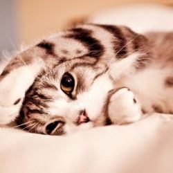 Animals_Cat-1024x640.th.jpg